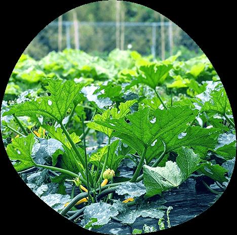 糸島ダーチャ農園 イメージ 2